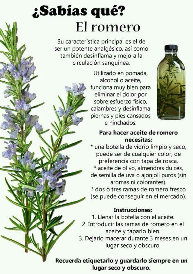 Aceite De Romero Hierbas Curativas Remedios Caseros Naturales Herbolaria