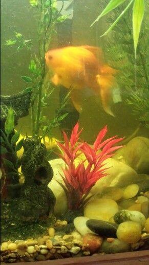 igor albino channel catfish peeking from rocks family pinterest
