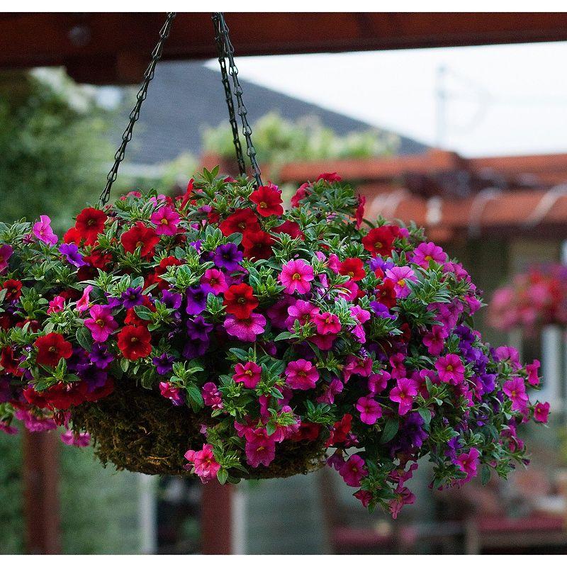 Hgtv home confetti craze plants plants hanging plants