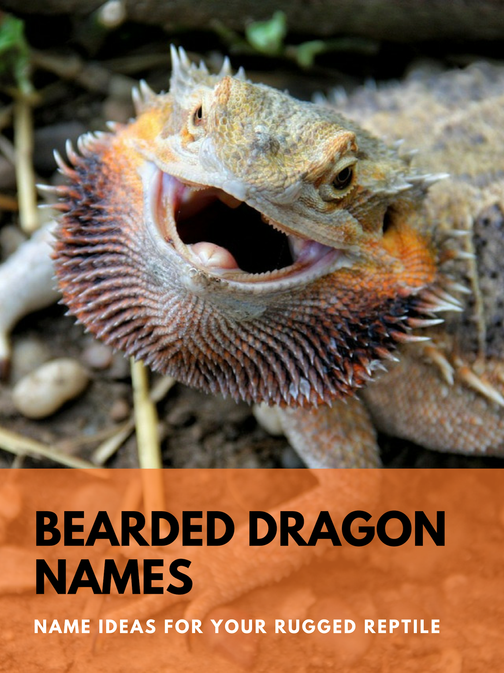 What Do I Name My Bearded Dragon