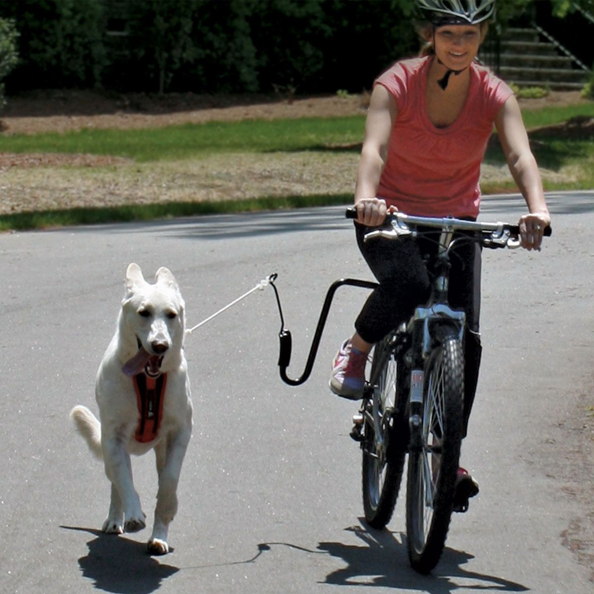 Bike Dog Excerciser: Designed to clamp to the frame or the seat stem, it also features an arm with a steel spring that absorbs up to 90% of the force of your pooch's tugs. You keep your bal