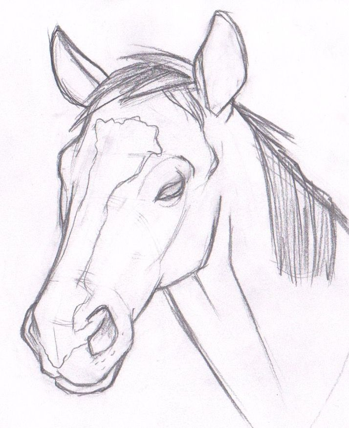 Horse Sketch Arts Crafts Tips Tricks Techniques Pinterest