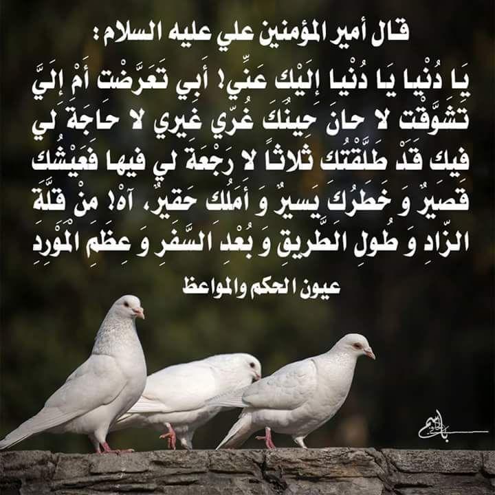 علـي On Twitter Animals Imam Ali Poems