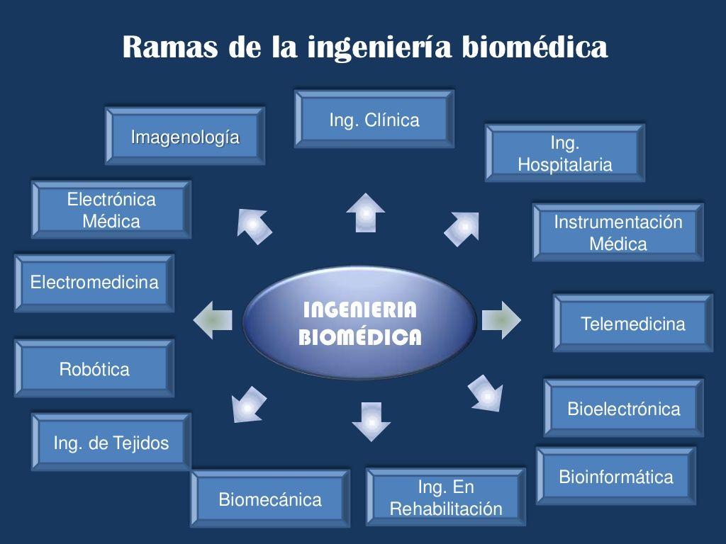 Ramas de la ingeniería biomédica<br />Ing. Clínica <br ...