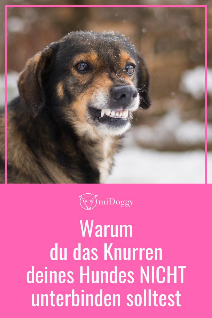 Hunde Die Bellen Beissen Nicht Midoggy Community Hunde Hunde Korpersprache Hundeverhalten