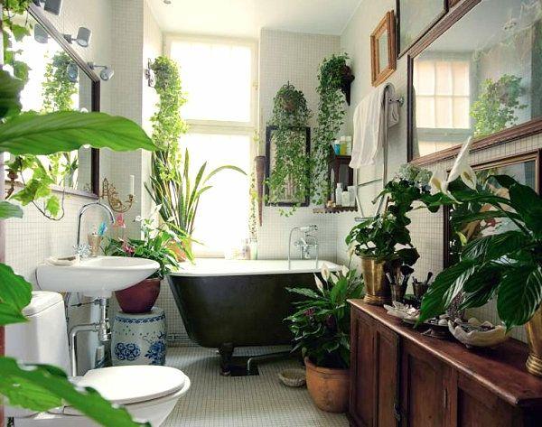 Pflanzen Badezimmer pflanzen im badezimmer badewanne spüle spiegel bad