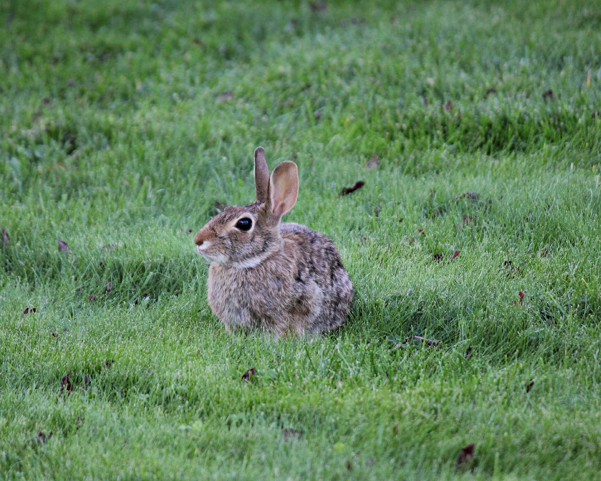 Rabbits | Rabbit garden, Garden pests, Cute animal videos