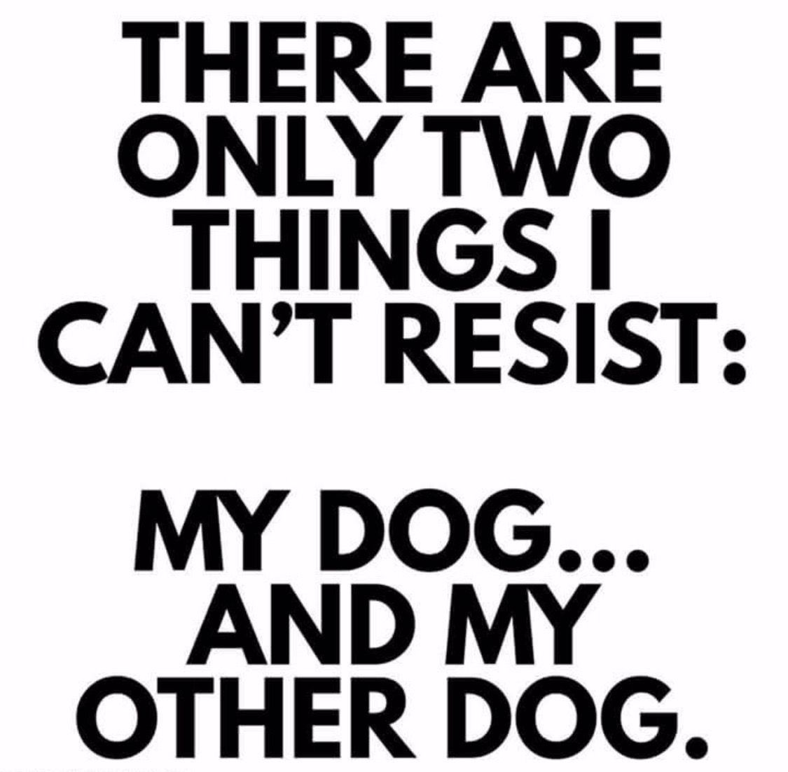 Pin by Gina Stiedemann on Dog in 2020 Dog quotes funny