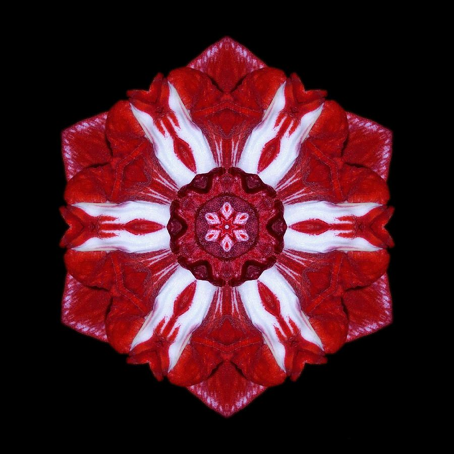 red-and-white-amaryllis-iv-flower-mandala-david-j-bookbinder.jpg (900×900)