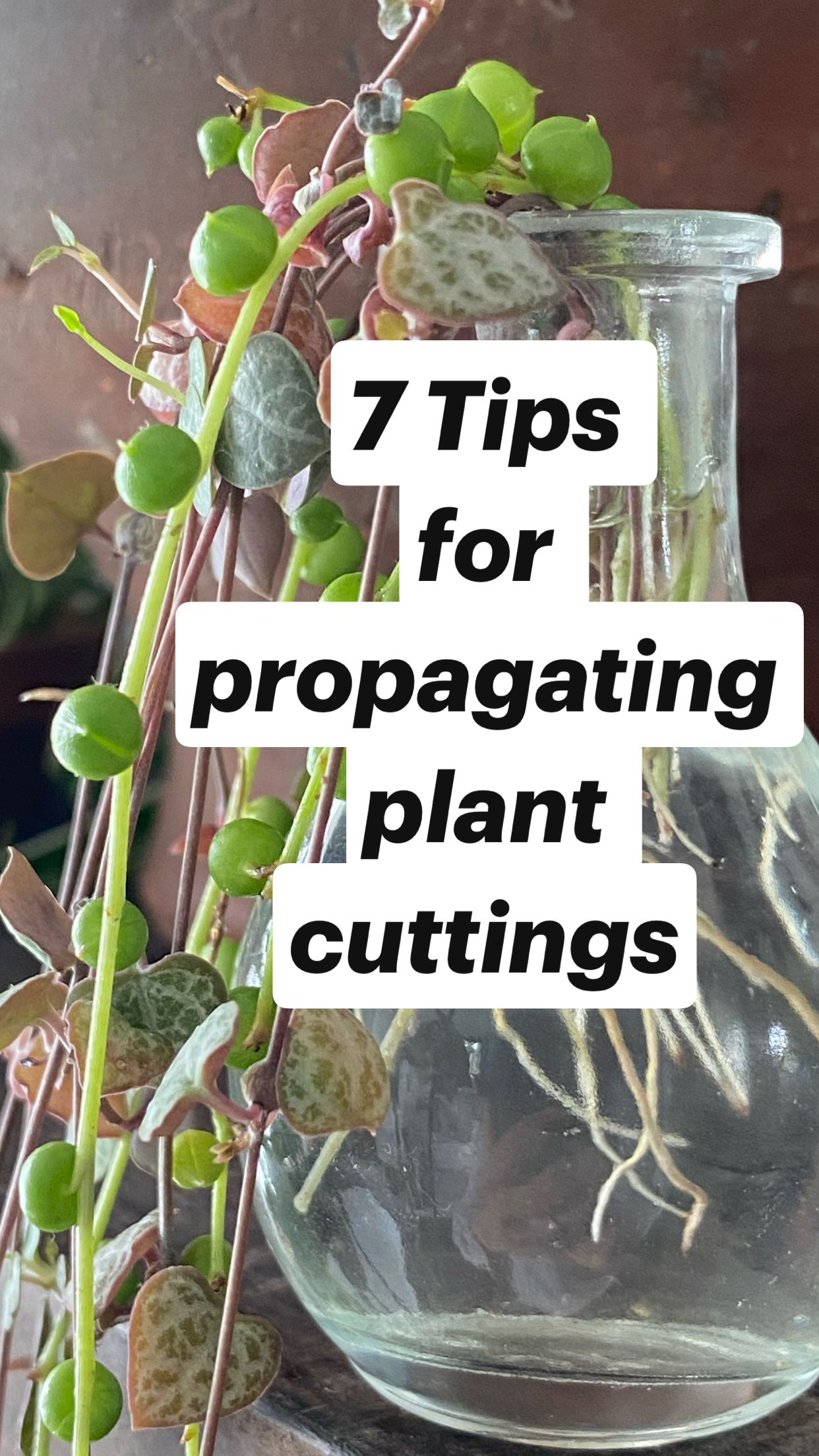 Easy DIY Gifting Idea:  Hanging Planters + Propagation Station. A Gift That Grows With You!