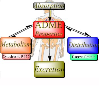 ch 5 absorption distribution and excretion Absorption, distribution and excretion in rats and mice  absorption, distribution, metabolism and excretion of this compound in the rat and  ch,n \ ch,ch, h ci.