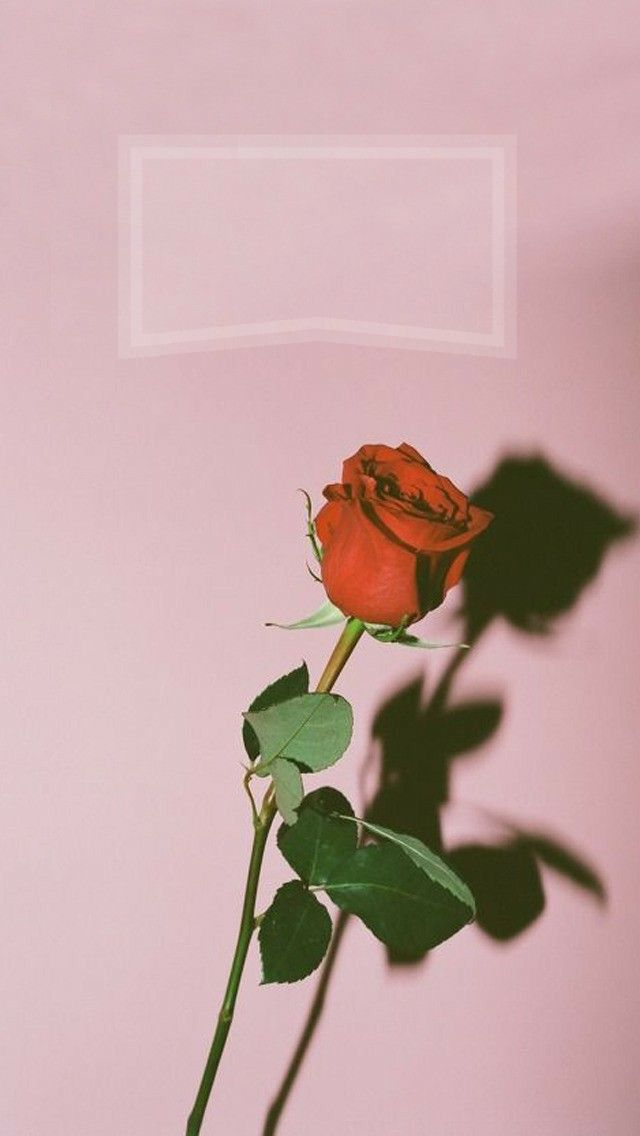 Iphone Wallpaper Iphone Wallpaper Rose Custom Lockscreen Nicht Mein Ursprungliches Foto Mypin Tumblr Iphone Wallpaper Wallpaper Tumblr Lockscreen Iphone Wallpaper Tumblr Aesthetic