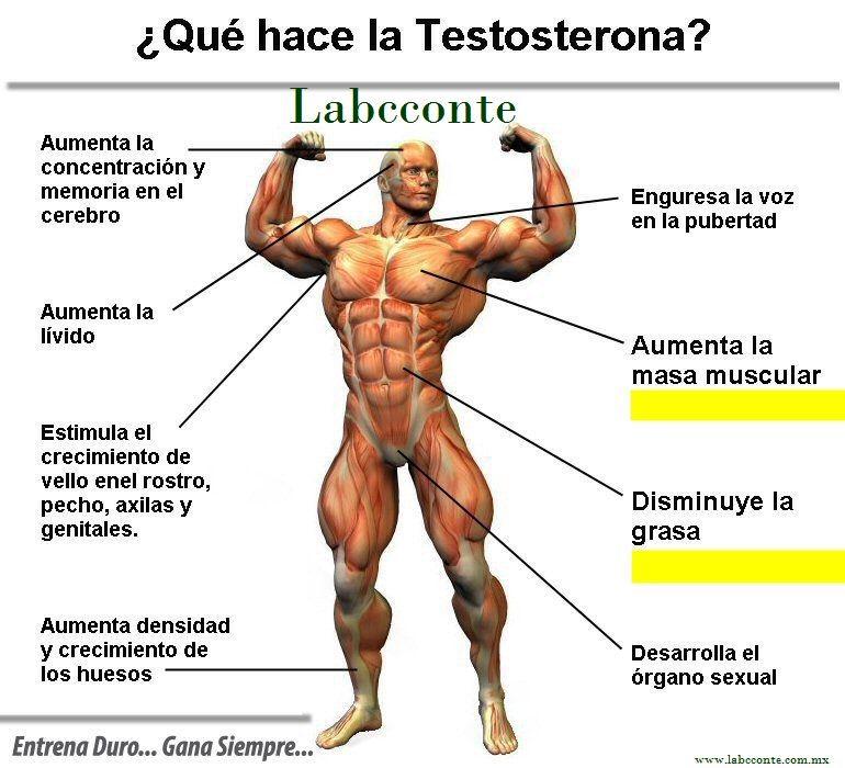 el nivel de próstata y testosterona