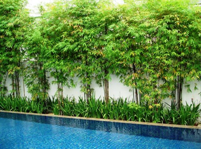 bamboo in landscape design with various themes house