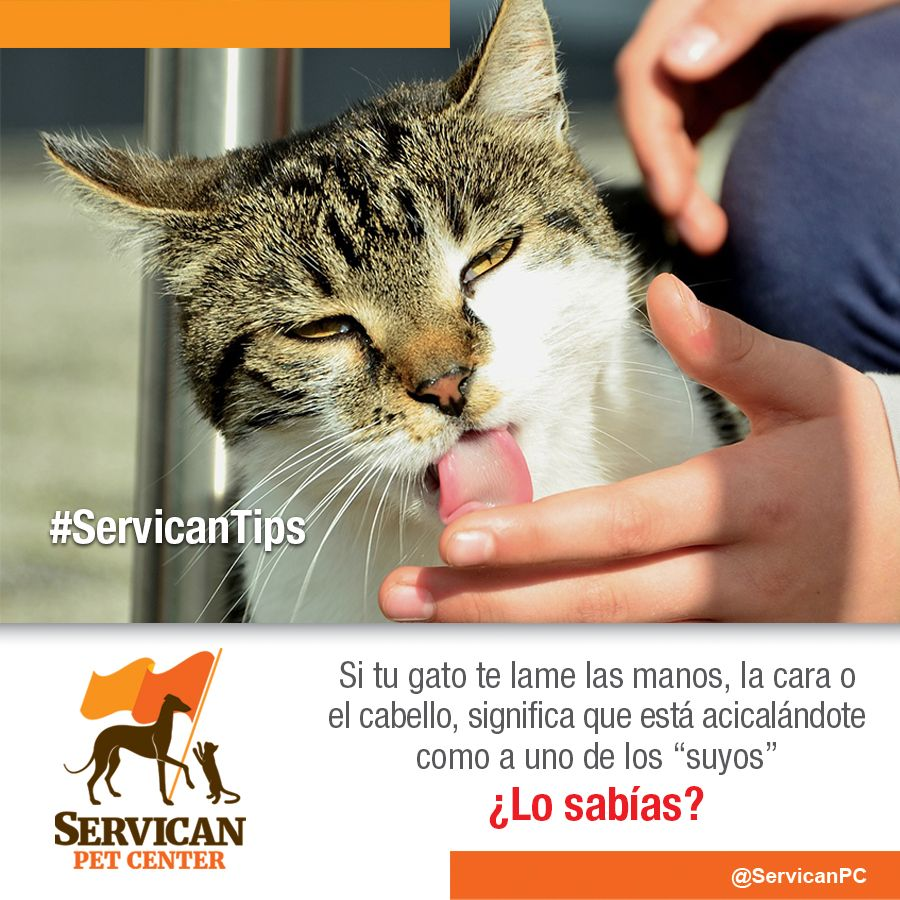 Pin On Servican Tips