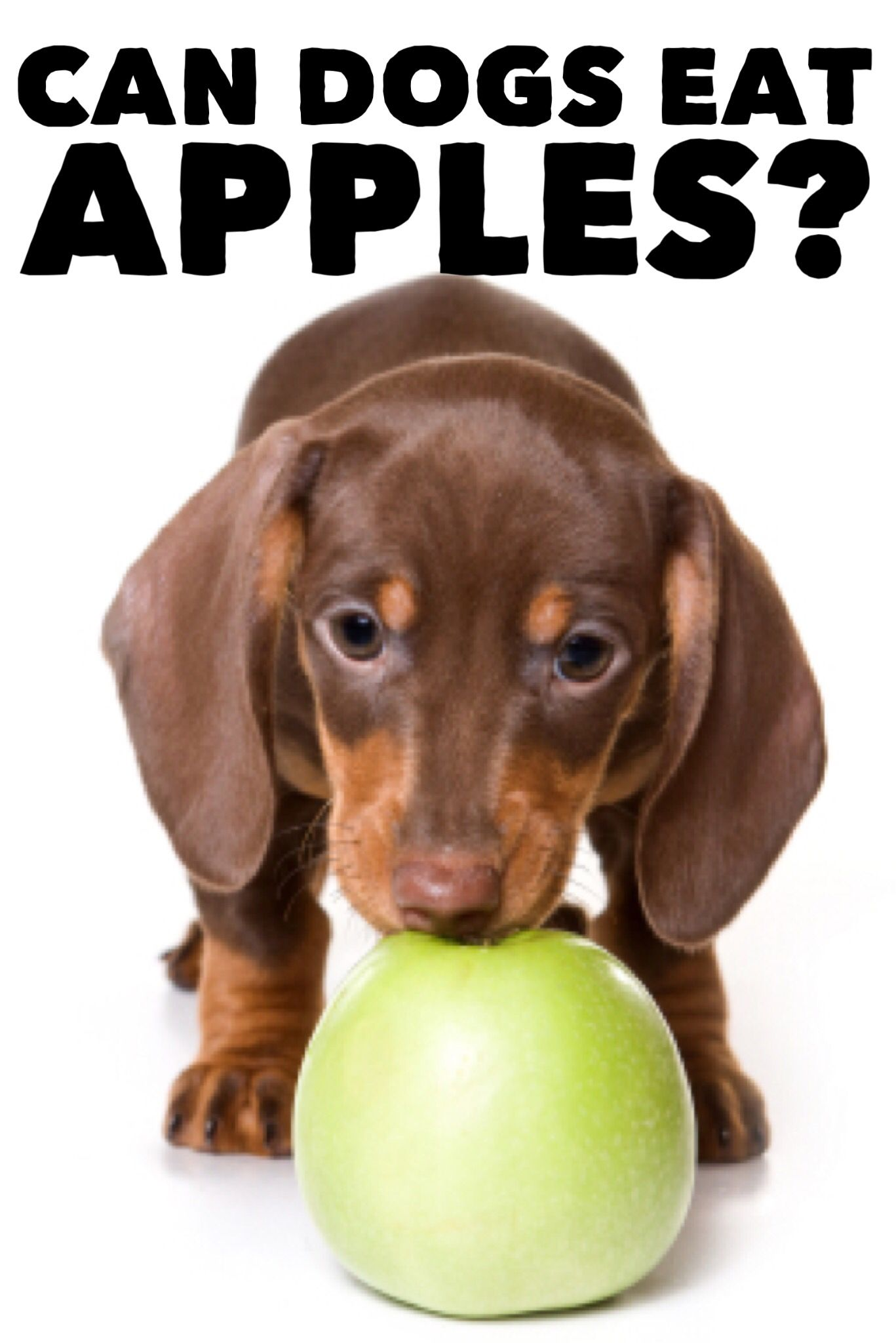 Mini Me Apple Tart Recipe Can Dogs Eat Apples Can Dogs Eat Dog Shots