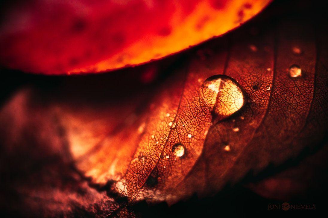Autumn Drop by Nitrok on deviantART
