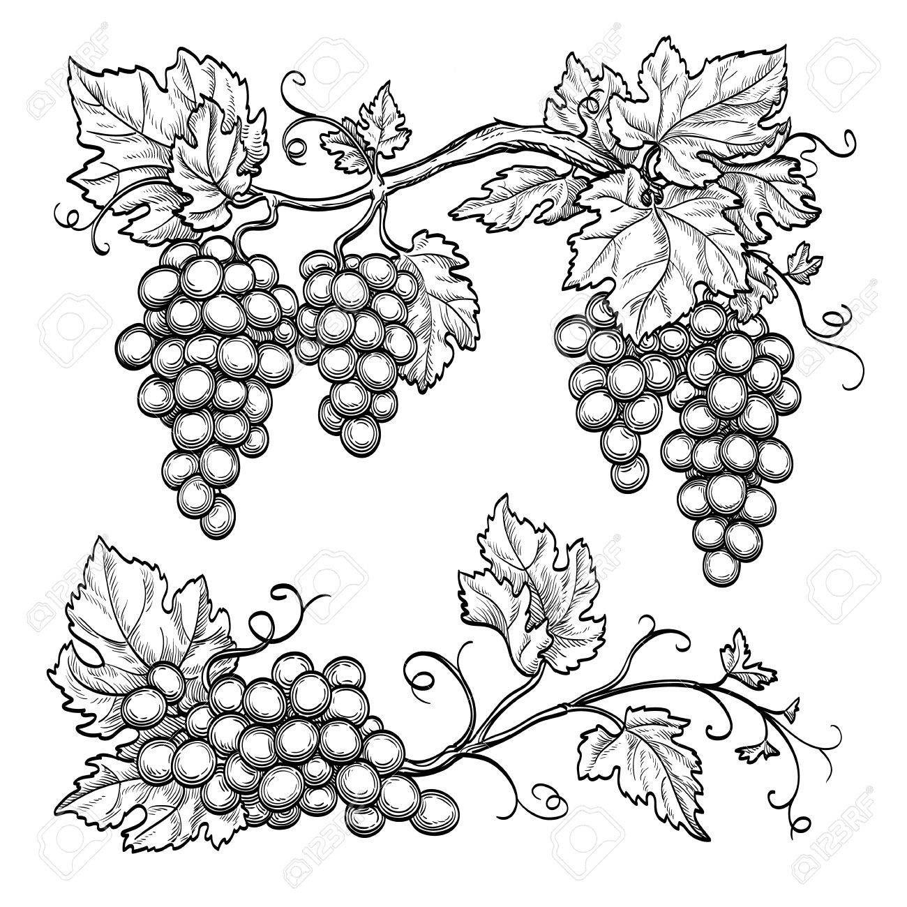 Image Result For Grape Leaves Drawing Vine Drawing Grape Drawing Leaf Drawing