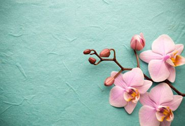 Shop Pink Orchid On A Background Wallpaper In Zen Theme Pink Orchid Wallpaper Orchid Wallpaper Pink Orchids