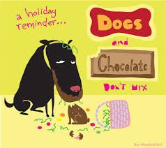 A holiday reminder... Chocolate Is Toxic To Dogs!