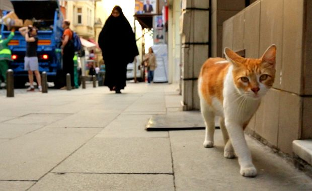 """""""Kedi"""" Is a Gorgeously Vexing View of Istanbul's Street Cats  #cats"""