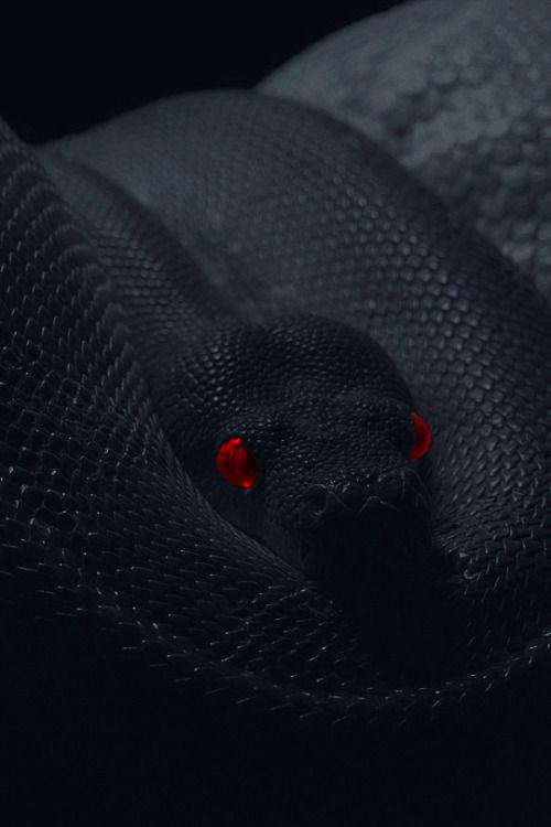 Dsxsdx Magnificent Monsters Snake Wallpaper Pet Snake Cute Snake