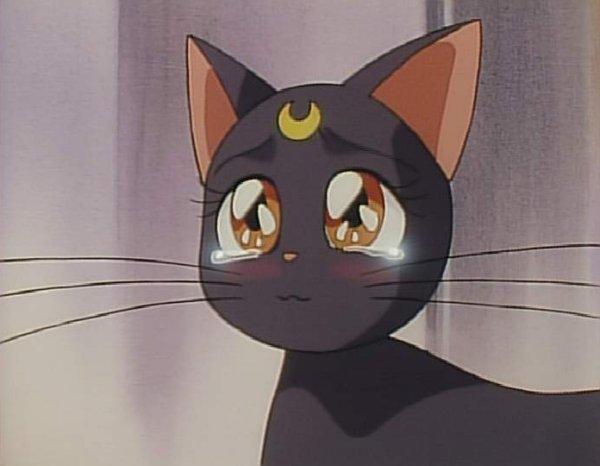 Luna Crying Sailor Moon Cat Aesthetic Anime Sailor Moon