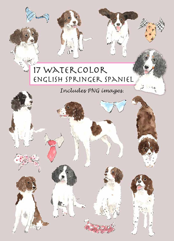 Clip Art Watercolor English Springer Spaniel Collar Set 17 Images Digital Download Puppy Doggy Collar Black White Brown English Springer Spaniel Springer Spaniel English Springer