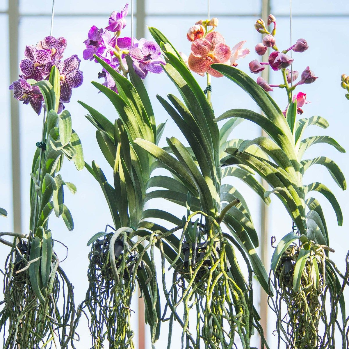 Test your orchid iquhow do orchid roots work plants pinterest
