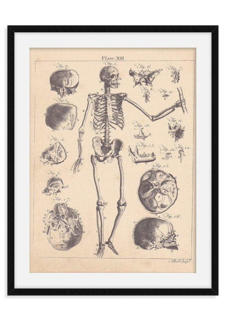 Anatomical anatomy art print antique book page vintage