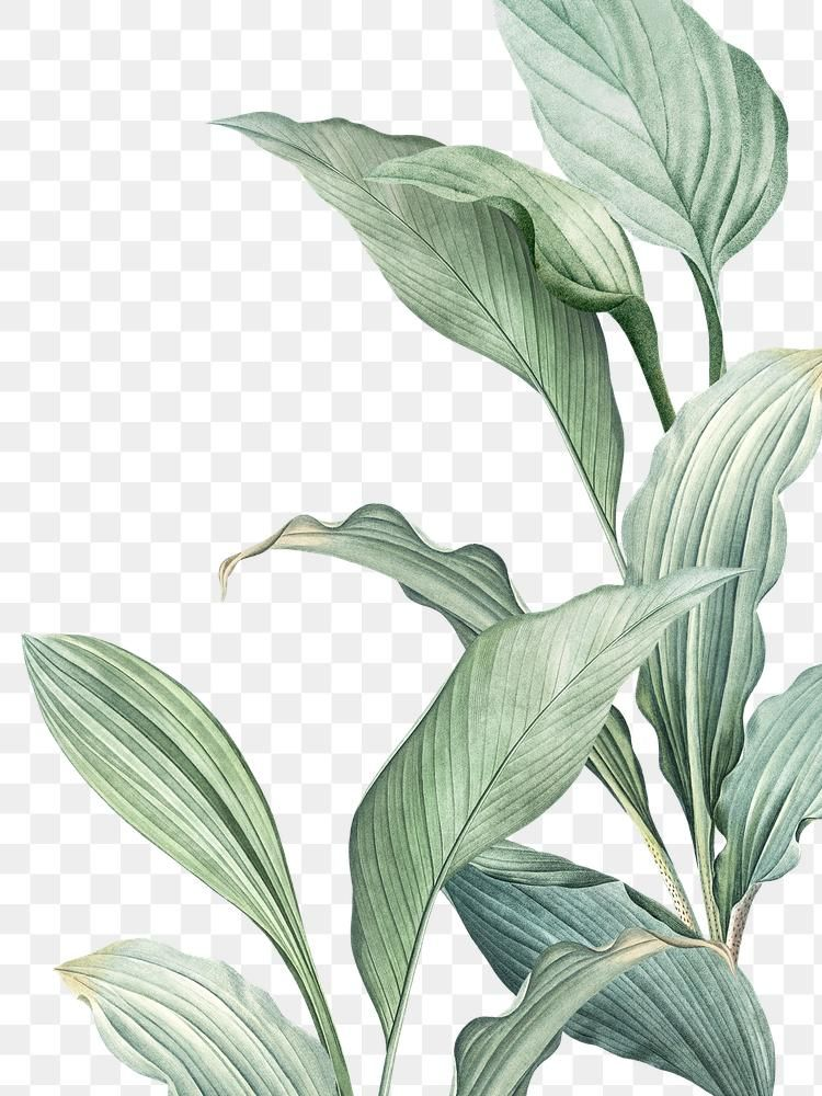 Hand Drawn Tropical Leaves Png Transparent Background Premium Image By Rawpixel Com Manota Tropical Leaves Illustration Leaf Illustration How To Draw Hands