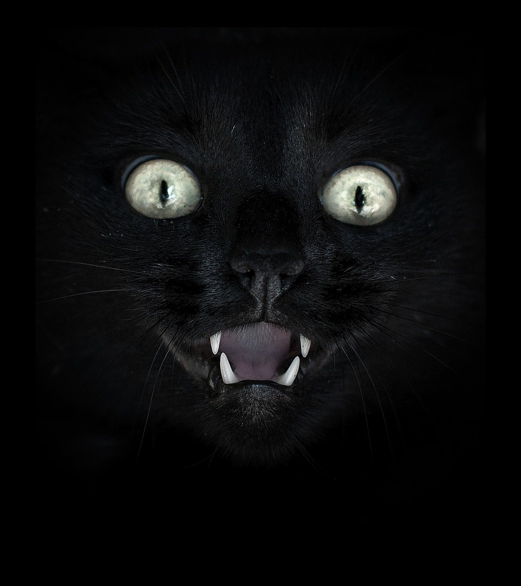 Adopt Don T Shop Black Cat Pin