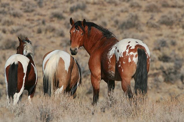 Last glance. Run, wild horses Run for your lives…