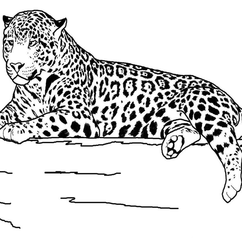 Realistic Animals Coloring Pages Printable Realistic