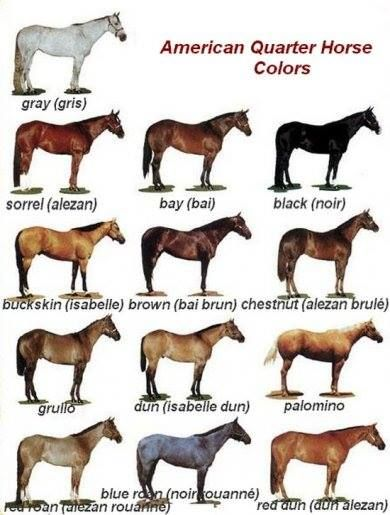 Pin By Nadege Nrd On Living The Country Life And Loving It Horse Color Chart American Quarter Horse Quarter Horse