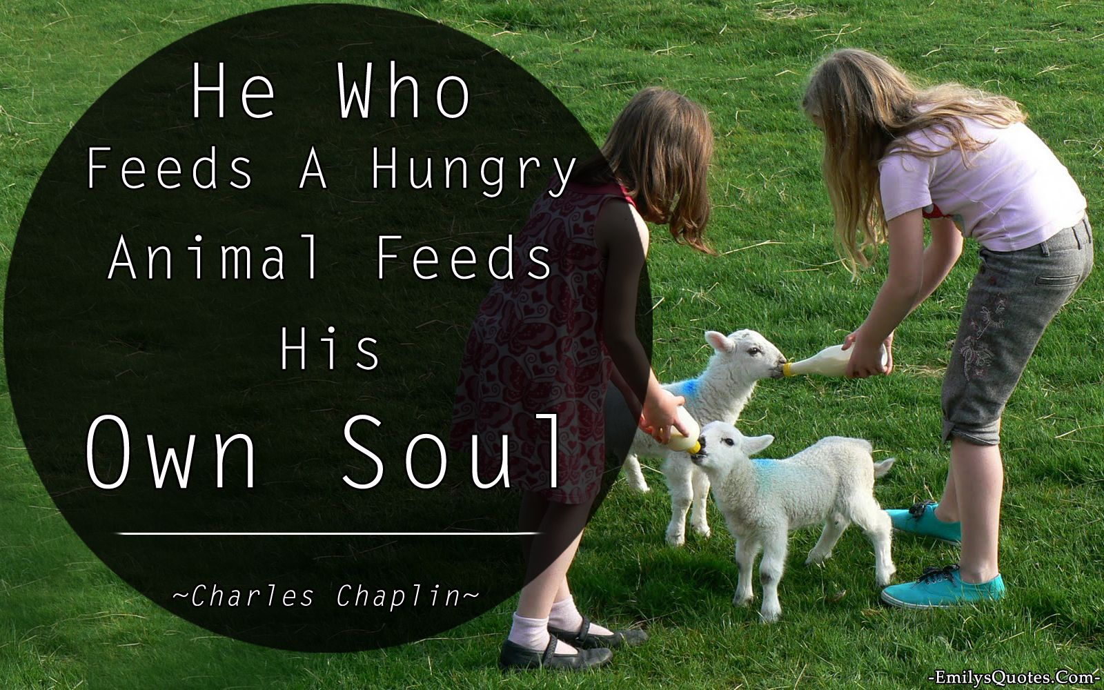 Love Animal Quotes He Who Feeds A Hungry Animal Feeds His Own Soul  Popular. My