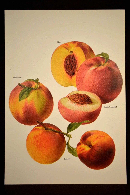 Fruit Wall Art Fruit Decor Kitchen Wall Art Peach Peaches ...