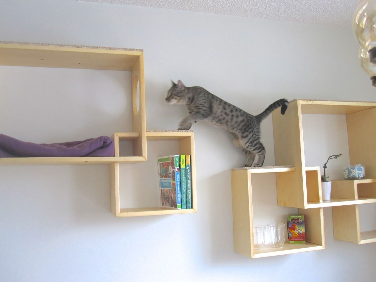 marvellous cat wall shelves furniture pinterest cat wall cat rh pinterest com Cat Tree Cat Furniture