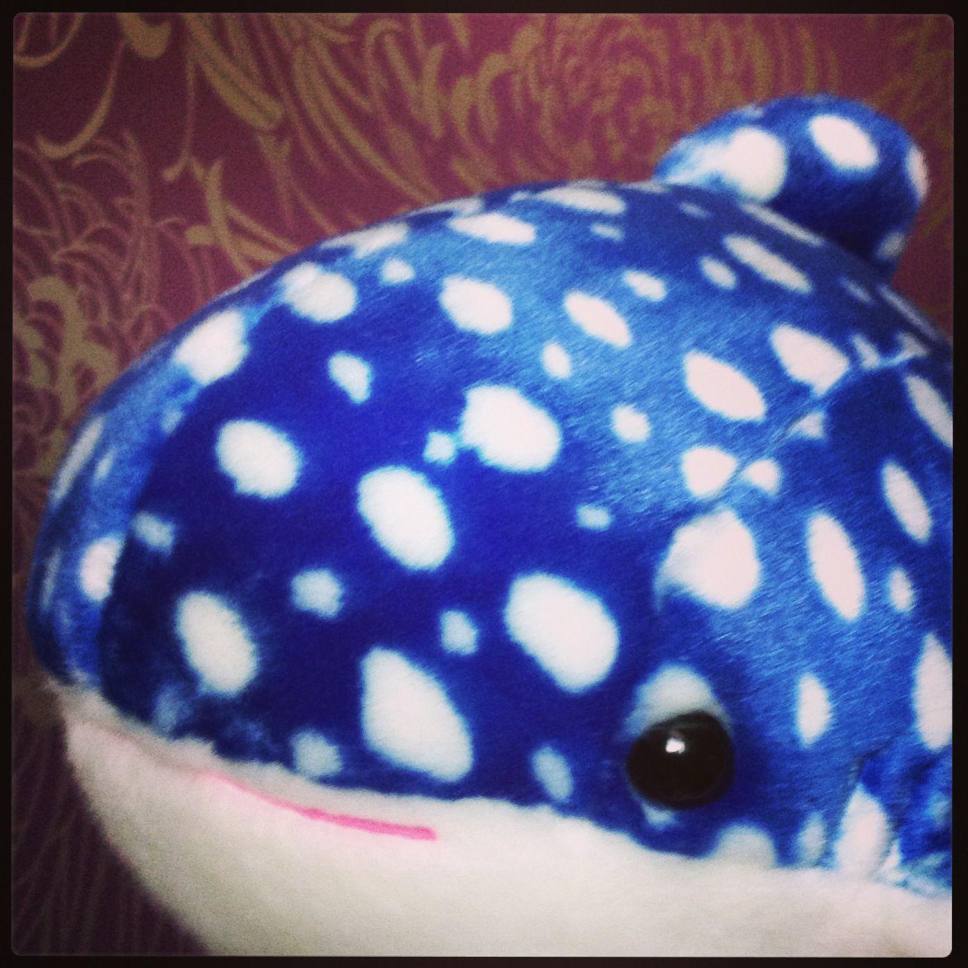c9f9e3d897809771f133dde681cc53ef Frais De Aquarium Osaka Concept