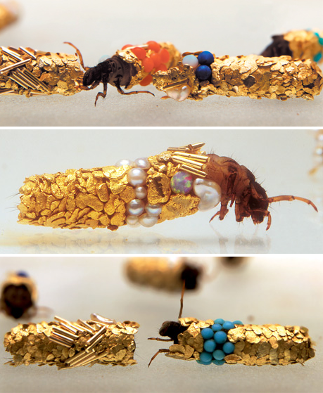 Thedandyunderworld Caddisfly Larvae Build Protective Cases Using