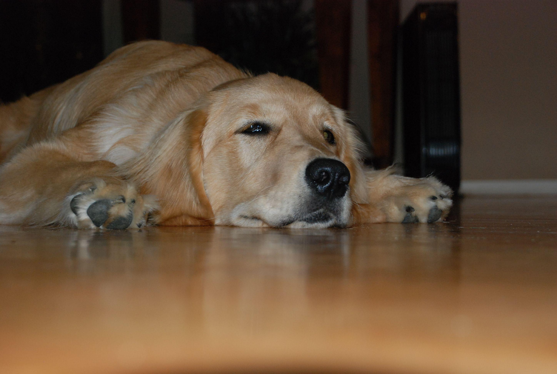 Leave me alone Mom, I'm DOG tired :)