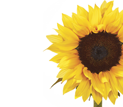 Sunflower warmth and happiness, adoration and longevity