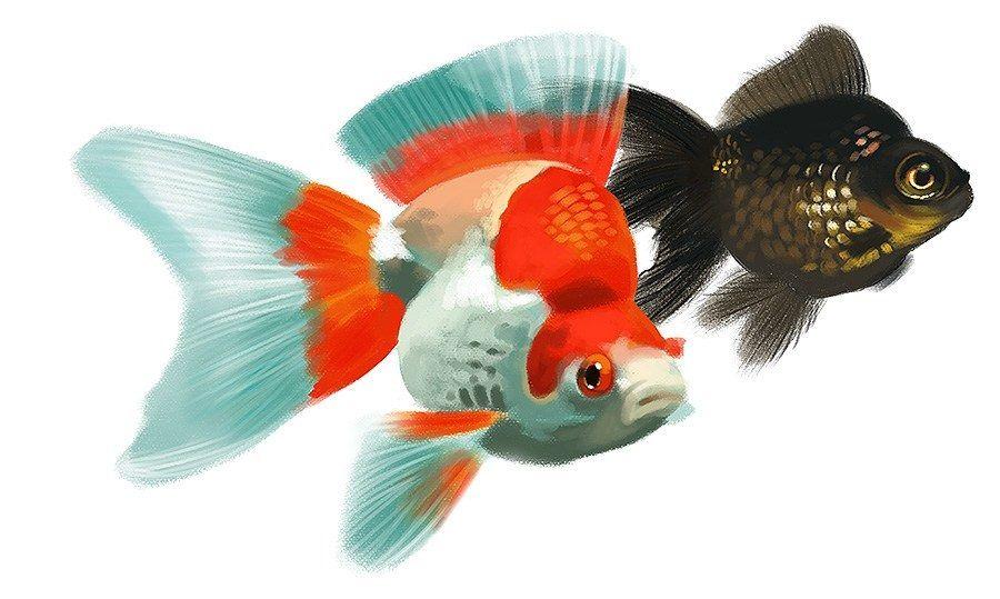 Pin De Dustie Wallace En Love Love Fish Pez Dorado Animales Dibujos