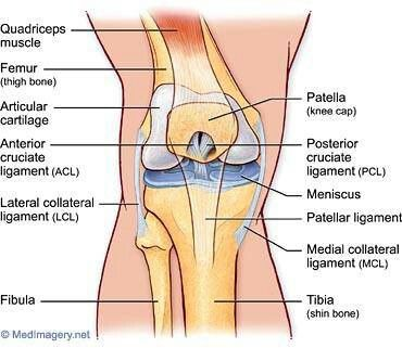 this is such a great diagram of the patella. my left knee will, Human body