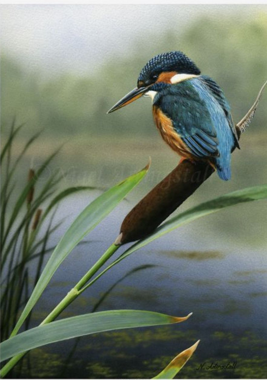 Pin by Susan Rogers on Wildlife art Pet birds