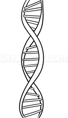 How To Draw Dna Step By Step Anatomy People Free Online Dna Art Dna Tattoo Dna Drawing