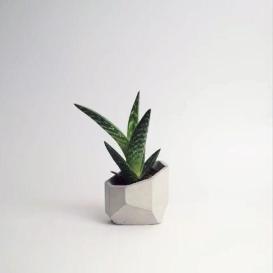 ALIUM - Concrete Geometric Planter