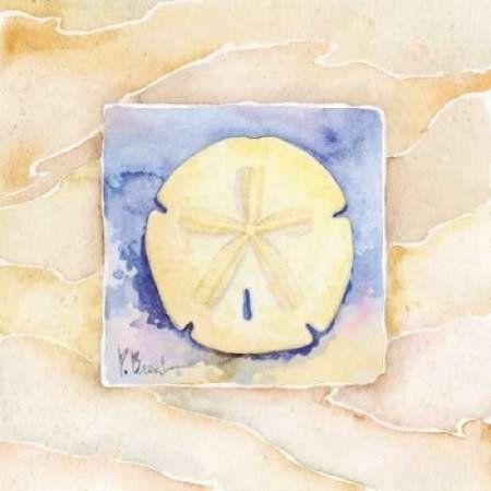 Sand dollar Canvas Art - Paul Brent (24 x 24)