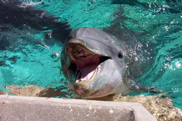 Dophin at Sea World Florida - feeding and petting the dolphins was great!!