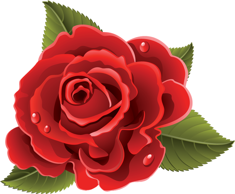 flores rosas rojas 86 png 800 661 vectores